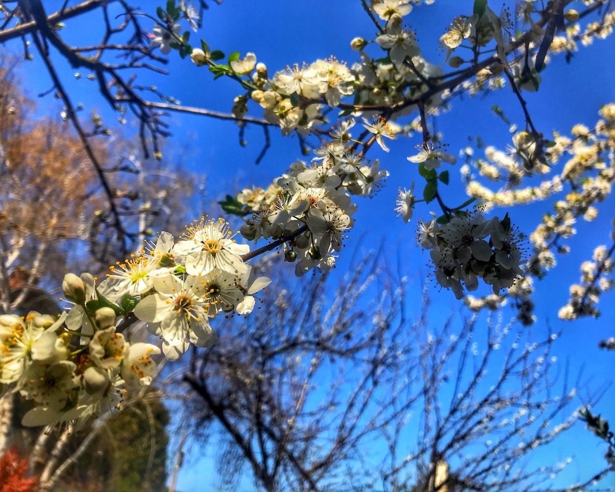 пролет bluming
